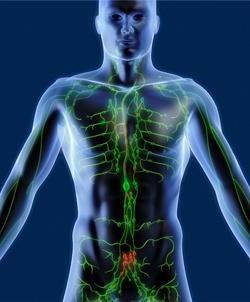 3D Illustration Röntgenbild Mensch mit Lymphknoten